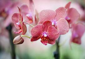 toledo psychiatry services
